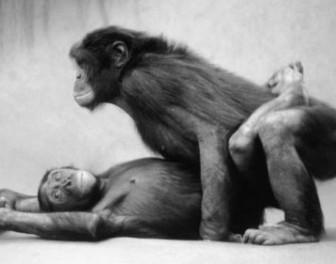 5 ciekawych zwyczajów seksualnych zwierząt