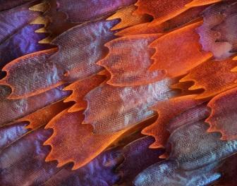 12 zachwycających zdjęć mikroskopowych