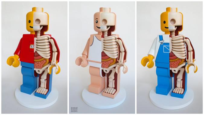 rzeźby anatomiczne zabawek