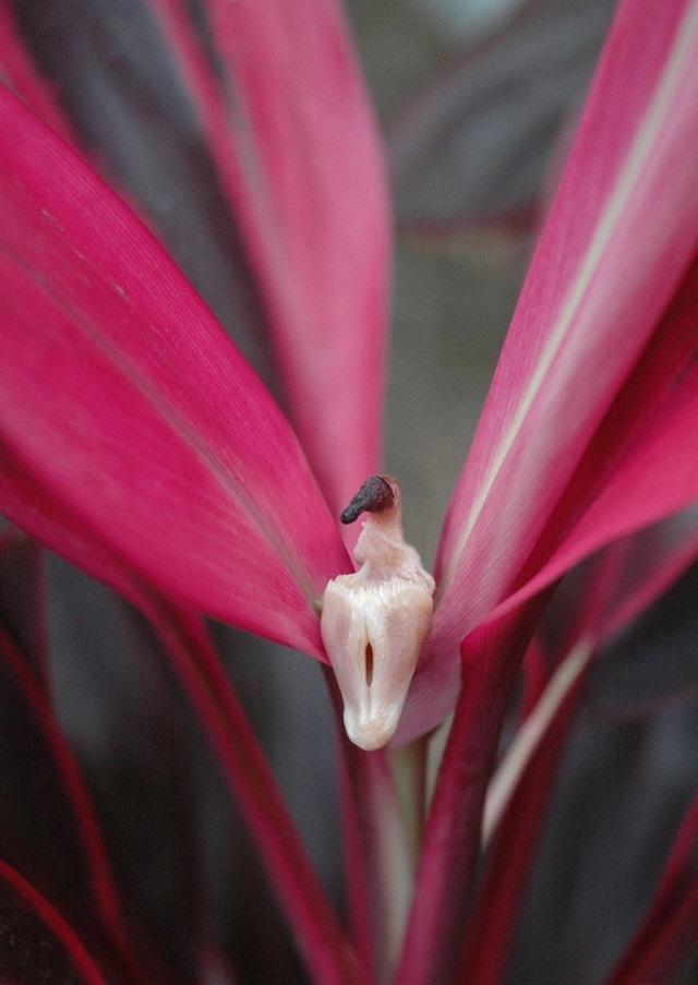 dziwne rośliny