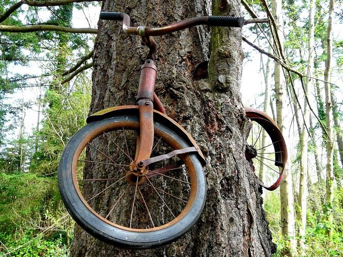 dziwne-drzewo-rower