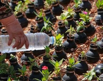 Palestyński ogródek