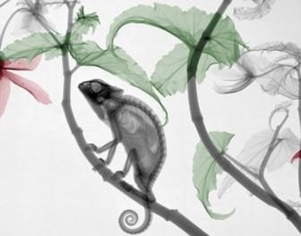 Piękno przyrody uchwycone na kolorowanych zdjęciach rentgenowskich