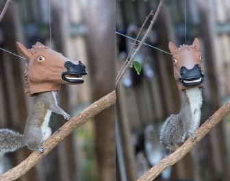 Jak upokorzyć wiewiórkę w humanitarny sposób
