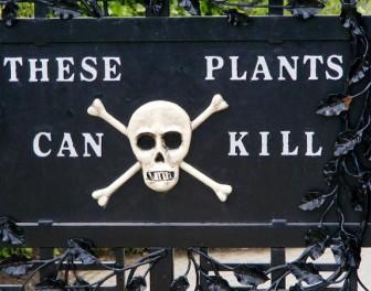 Uroczy angielski ogród pełen śmiertelnie trujących roślin