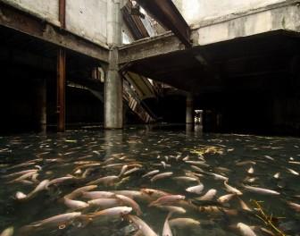 Opuszczone centrum handlowe zamieniło się w gigantyczne akwarium dla ryb