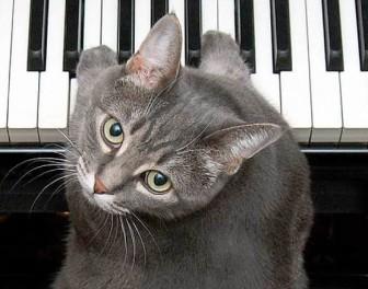 Koncert fortepianowy w wykonaniu KOTA i profesjonalnej orkiestry kameralnej