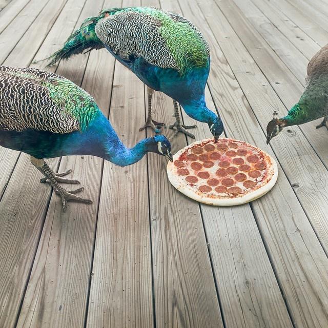 pizza-na-wynos-12