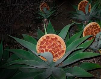 Pizza na wynos wyniesiona do rangi sztuki