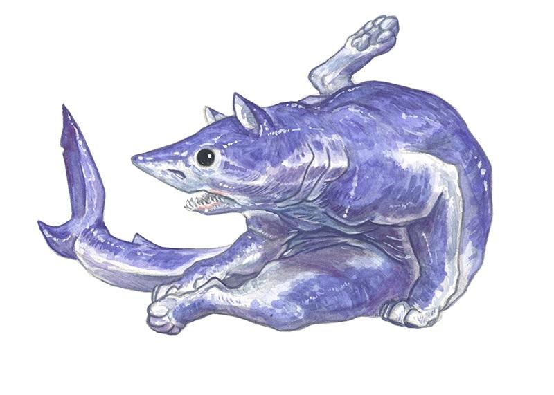 koto-rekiny-10