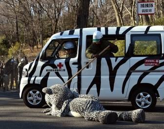 Kuriozalne ćwiczenia dla pracowników japońskich ogrodów zoologicznych